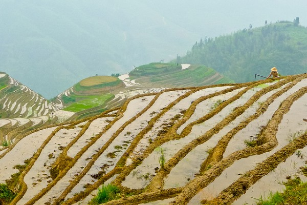 Longsheng Terraced Fields