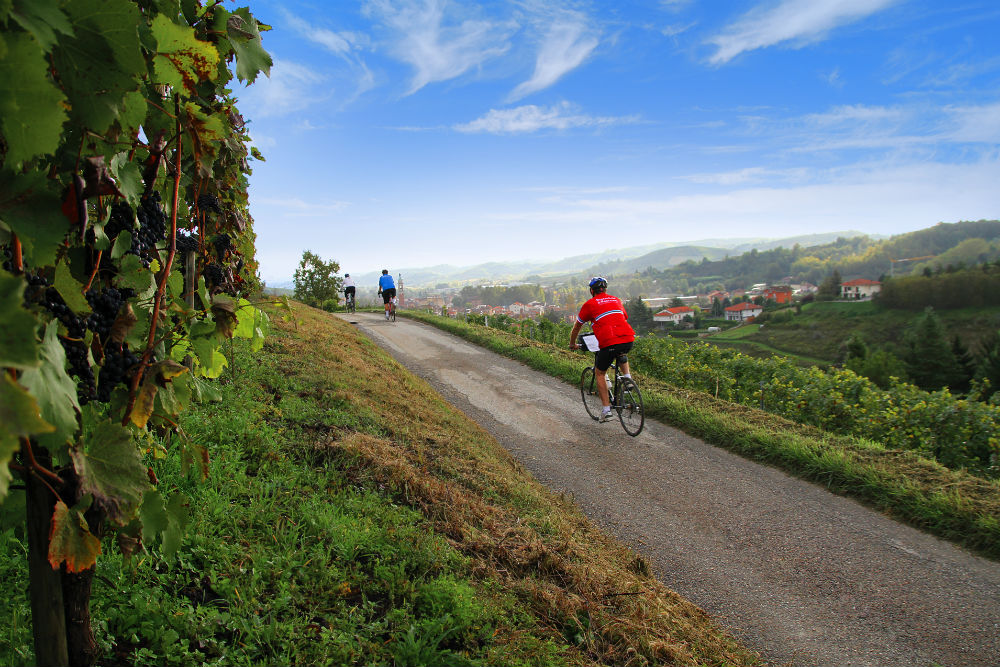 bicyclists in Piemonte Italy wine country