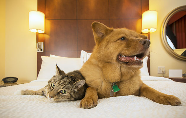 dog and cat in hotel room