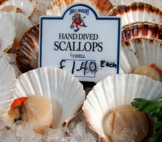 Scallops-hand-dived-550